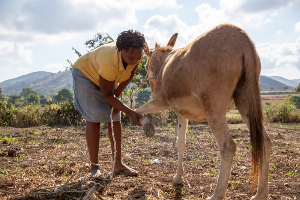 Make a difference for donkeys