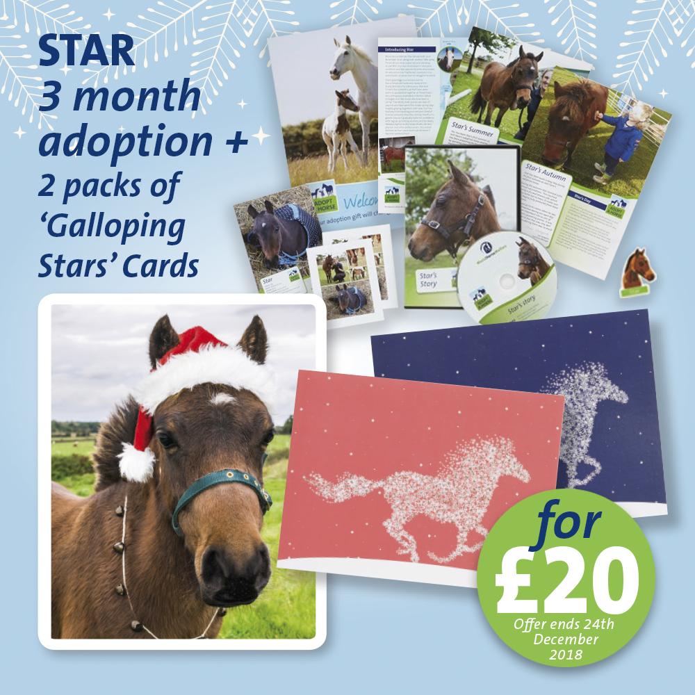 STAR ADOPT A HORSE CHRISMAS