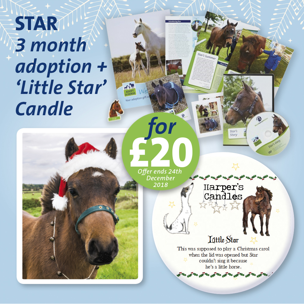 STAR ADOPT A HORSE CANDLE OFFE