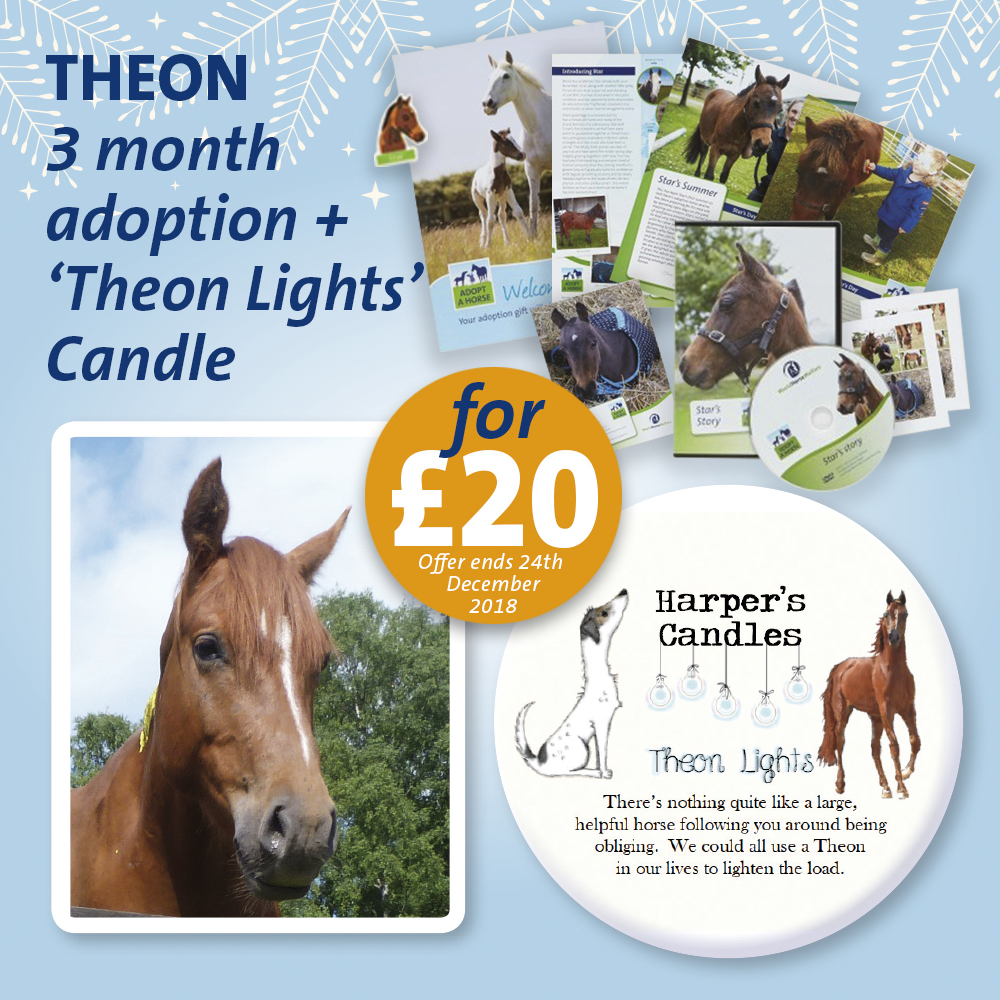 THEON ADOPT A HORSE CANDLE