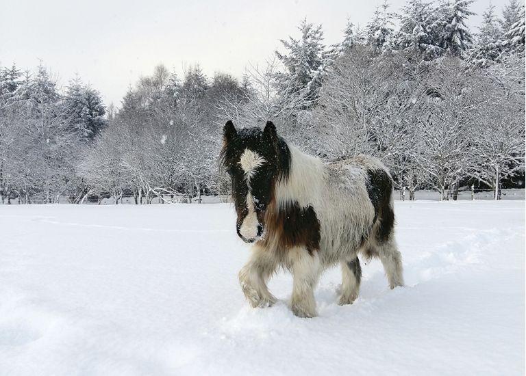 HOOFPRINTS IN THE SNOW